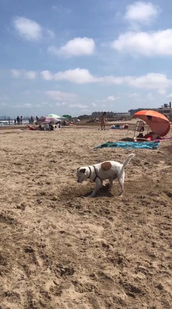 playa-alborada-perros