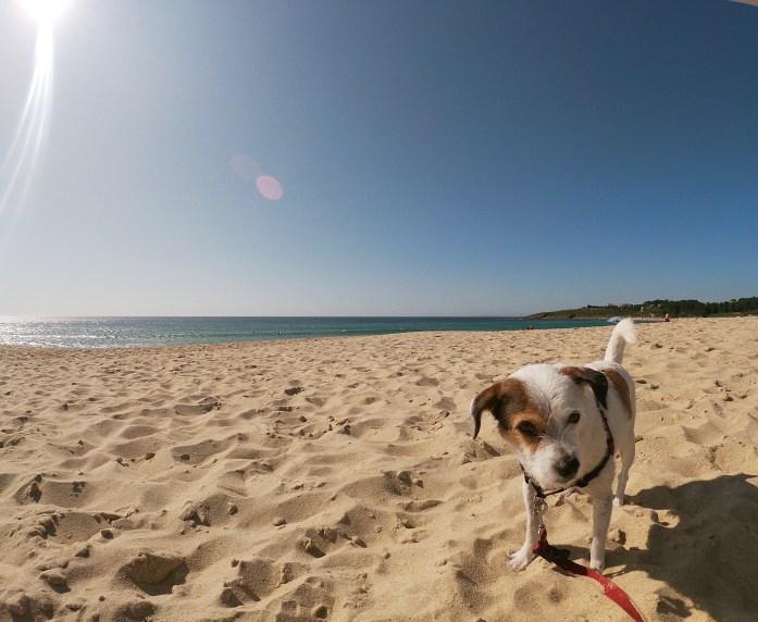 playa-para-perros