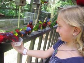 11 bird park (1)