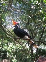 11 bird park (2)