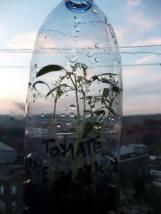 bouteilles4
