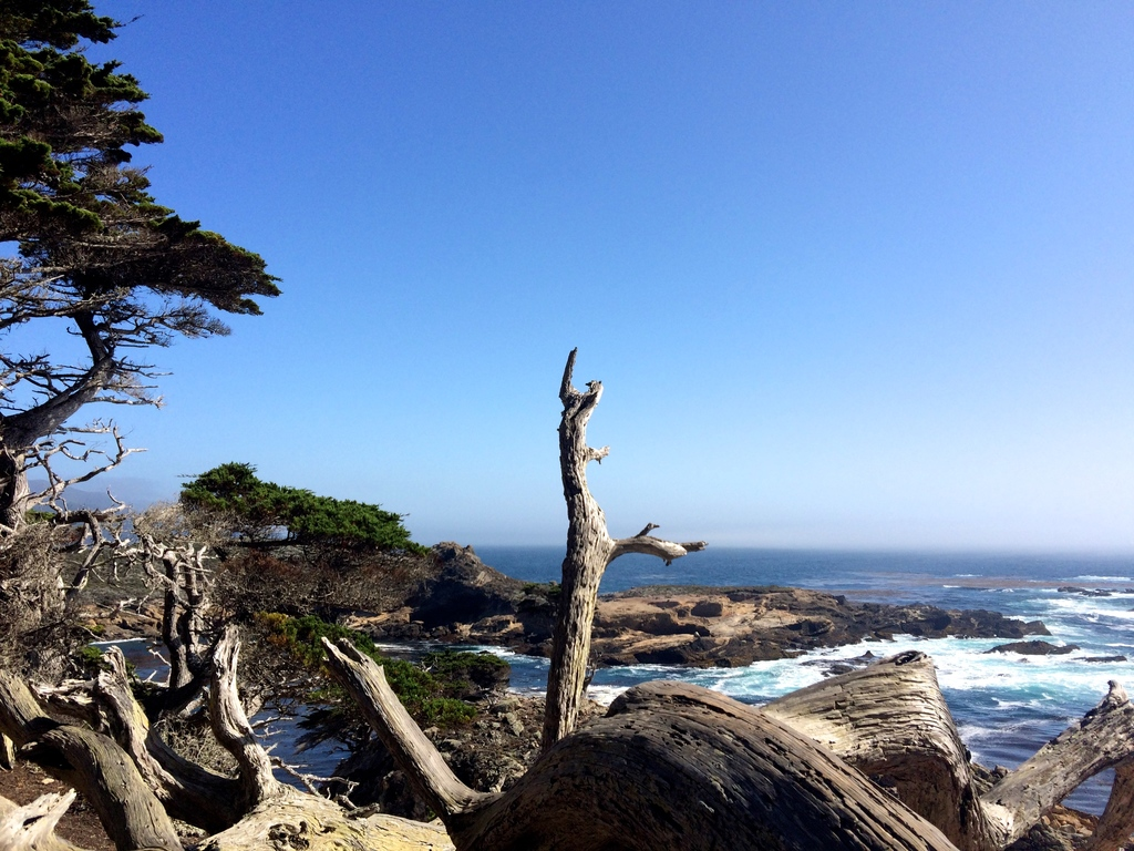la-vie-en-rose-flamant-point-lobos-grove-trail