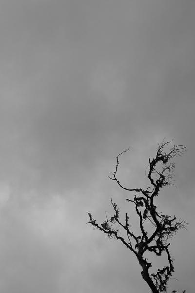 Первые мгновения тьмы - Лавина Кёрки