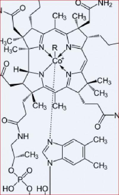 vitamin b12 « La Vineria
