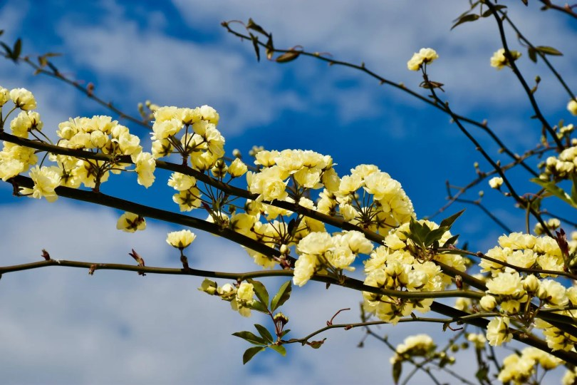yellow flowers on brown tree branch