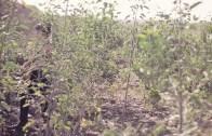 La Vitrola.cl: Mon Laferte – Depresión