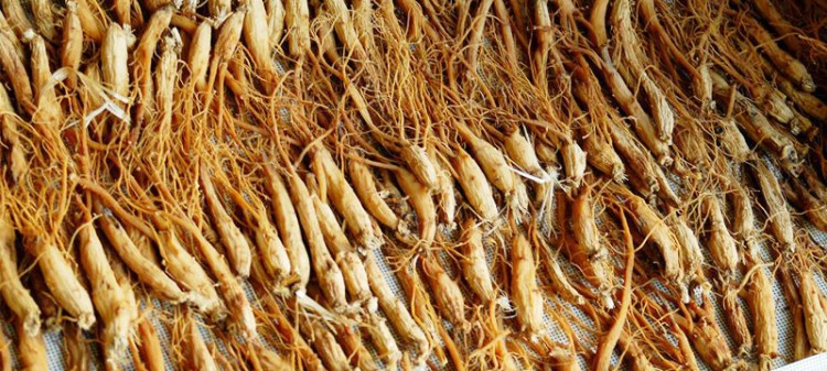 Korean Ginseng Benefits