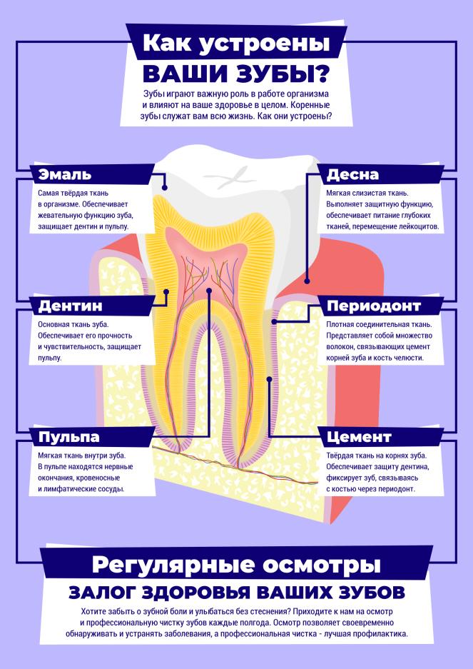Как устроены ваши зубы_синий_v2