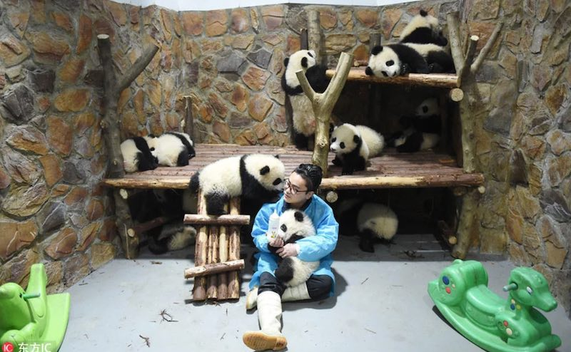 Няня панд работа мечты
