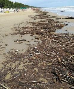 Detriti sulla spiaggia di Pineto_