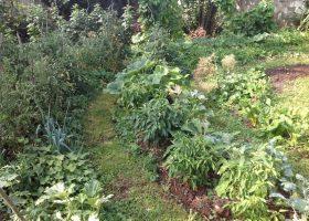 Créer son potager écologique et naturel