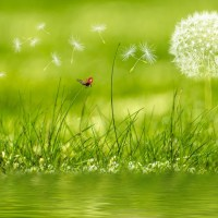 Programme écologie au quotidien