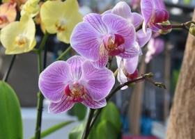 Tout savoir sur la culture des orchidées