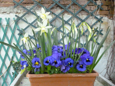 vaso primavera