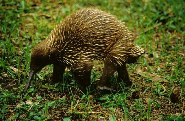 Animales en extincion 23