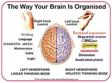 cosas sobre el cerebro 4