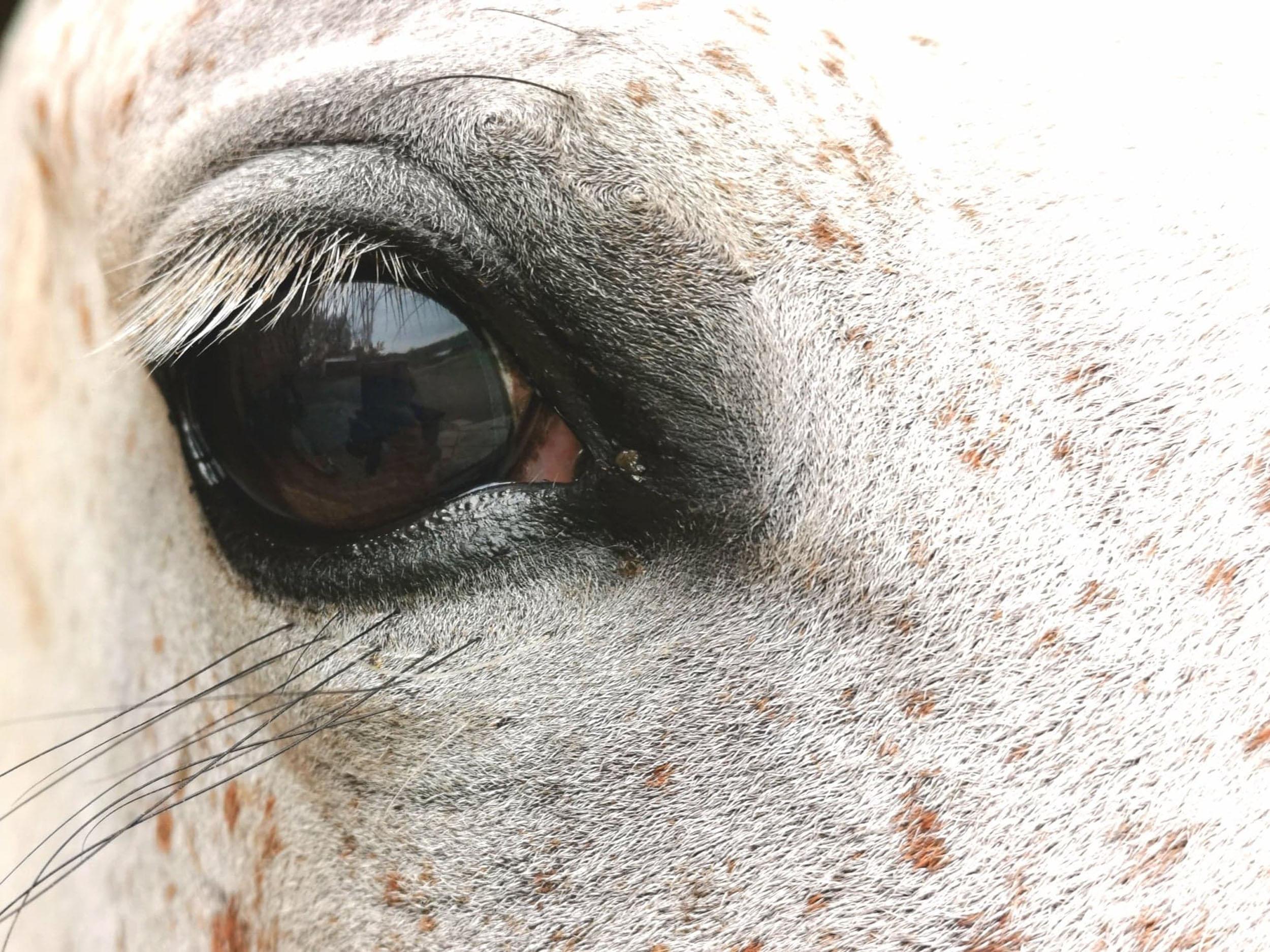 Poznaj nasz konie :)
