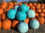 teal-pumpkins