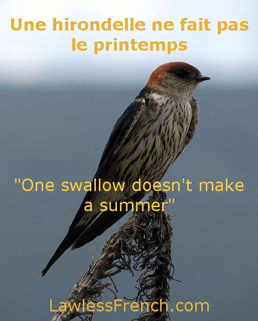 Une Hirondelle Ne Fait Pas Le Printemps : hirondelle, printemps, Hirondelle, Printemps, Lawless, French, Proverb