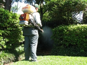 Mosquito Control, Mosquito Control Minneapolis – How To Get Rid Of Them, Lawn Care Service Minneapolis