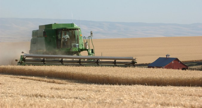 Harvesting wheat near Pendleton, Oregon.