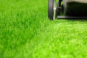 Lawn care yard grass
