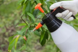 best fungicides for lawn