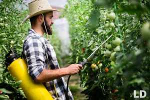 best fungicide for tomatoes