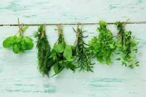 best herb seeds