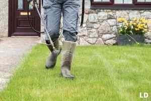 best liquid fertilizer for lawn