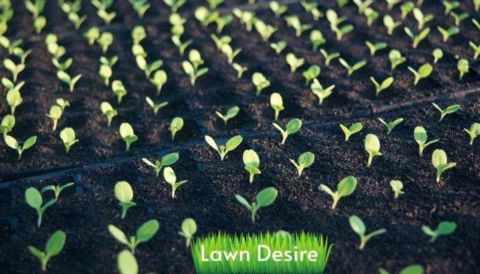 best planting trays