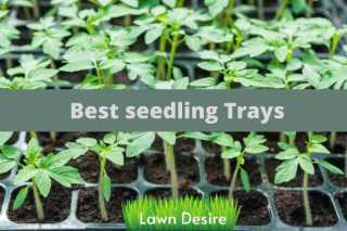 best seedling trays
