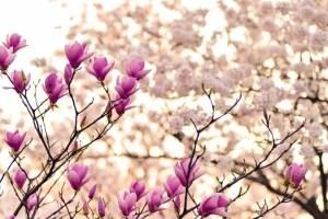 best fertilizer for magnolias