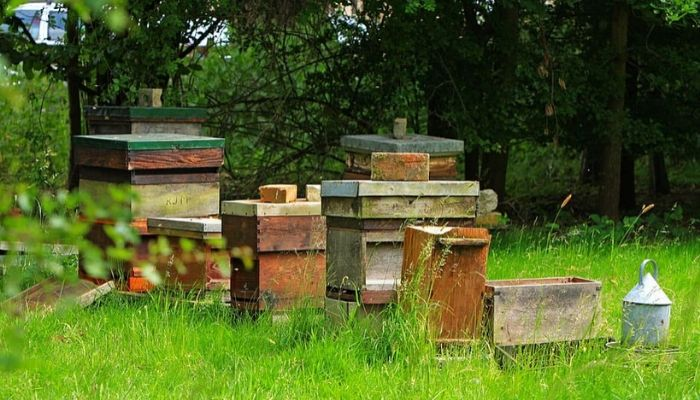 place of beehive
