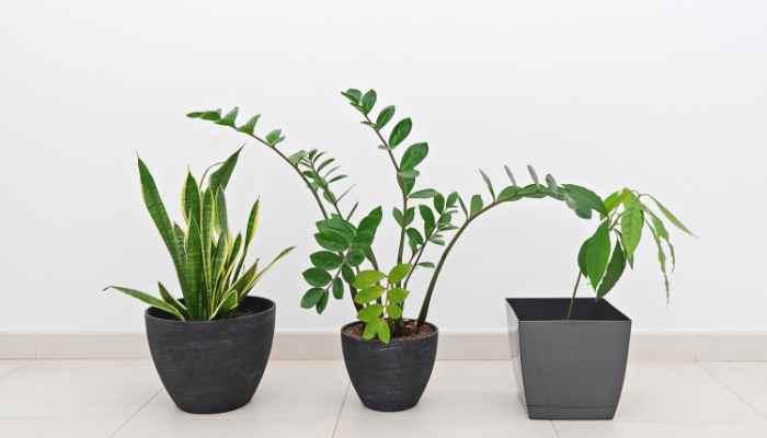 fertilizer for indoor plants