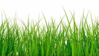 Best Grass Seed For Tidewater Virginia