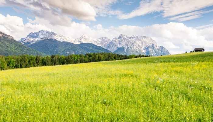 How Much Fertilizer Per Acre of Pasture