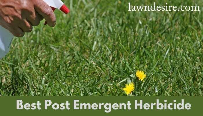 Best Post Emergent Herbicide