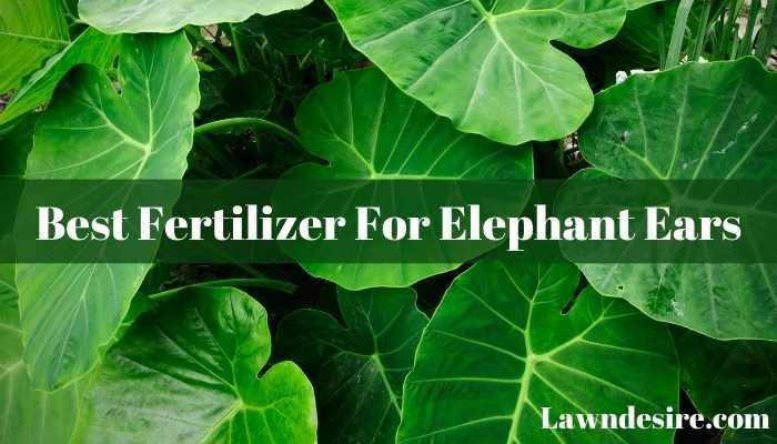 Best Fertilizer For Elephant Ears