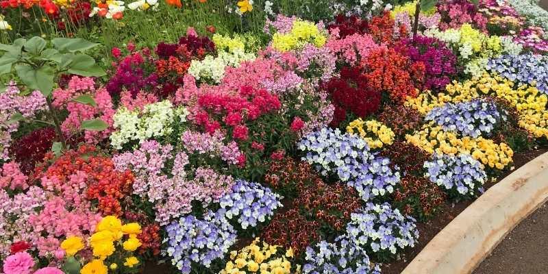 bermuda Grass in Flower Beds