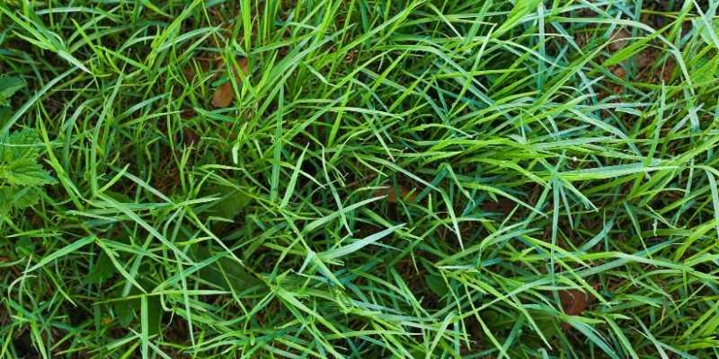 Does Human Urine Kill Grass