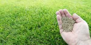 Where Does Grass Seed Come From