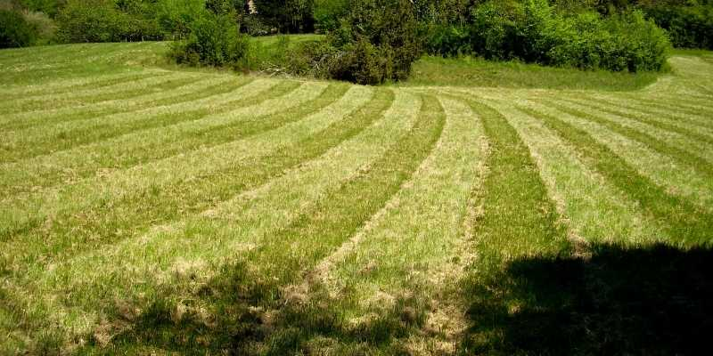 Best Lawn Mower Blades for Striping