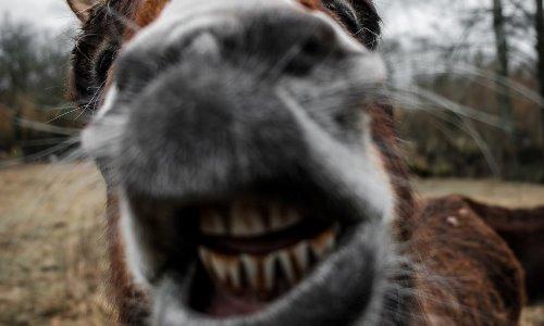 donkey newsom