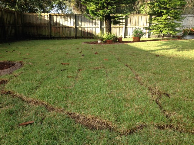 Zoysia Sod Replacement in Valrico