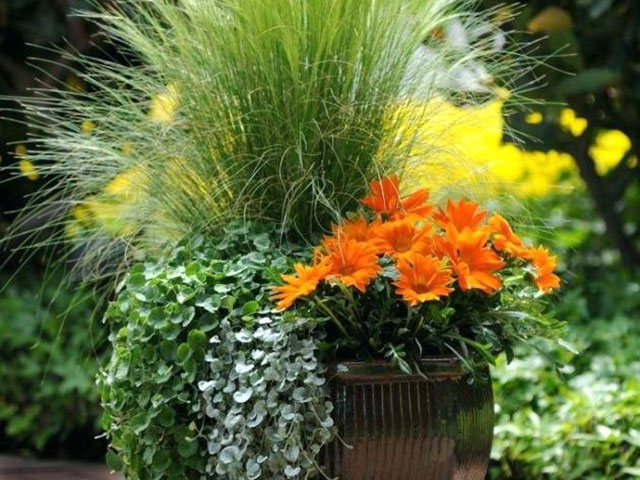 Custom container gardens Vero Beach Florida
