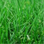 Lawn Care for Bahia Grass in Vero Beach