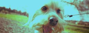 Laughing-Dog-Packaging-Web-Banner