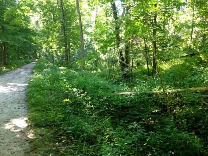 Kal Haven forest