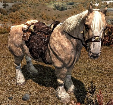 pic of Frost, one of the stout horses of Skyrim
